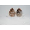 Liefde, met twee vogeltjes